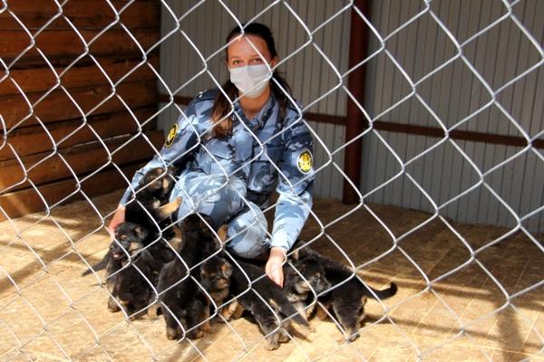 Щенки из племенного питомника служебного собаководства УФСИН России по Республике Коми отправятся нести службу в Санкт-Петербург