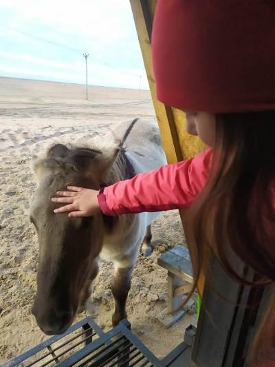 Сотрудники КП-20 УФСИН России по Мурманской области приняли участие в спасении лошадей Кузомени