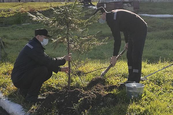 Осужденные ИК-14 УФСИН России по Хабаровскому краю приняли участие в акции «Сохраним лес»