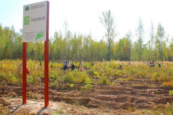 Сотрудники УИС Тамбовской области посадили около 4000 саженцев сосны в рамках Всероссийской акции «Сохраним лес»