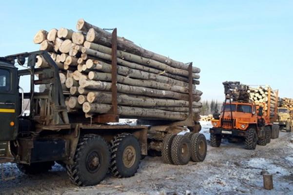 Учреждениях ГУФСИН России по Свердловской области на делянках ведут заготовку и вывозку леса