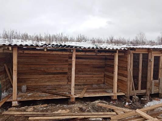Сотрудники отдела специального назначения «Утес» УФСИН России по Томской области помогают бездомным животным
